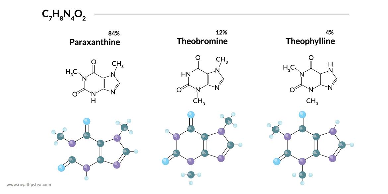 metabolitos de la cafeina teofilina teobromina paraxantina