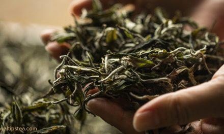 ¿Cuál es el mejor té del mundo?