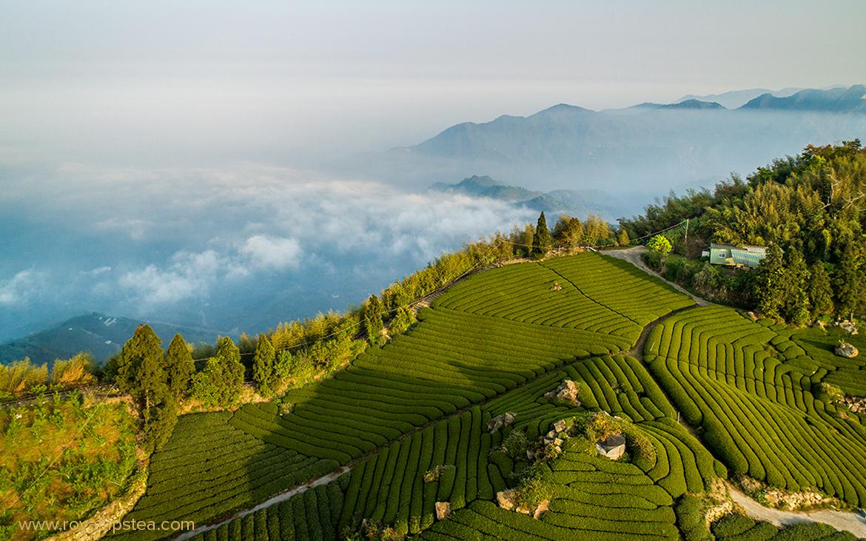 plantaciones del mejor te en taiwan