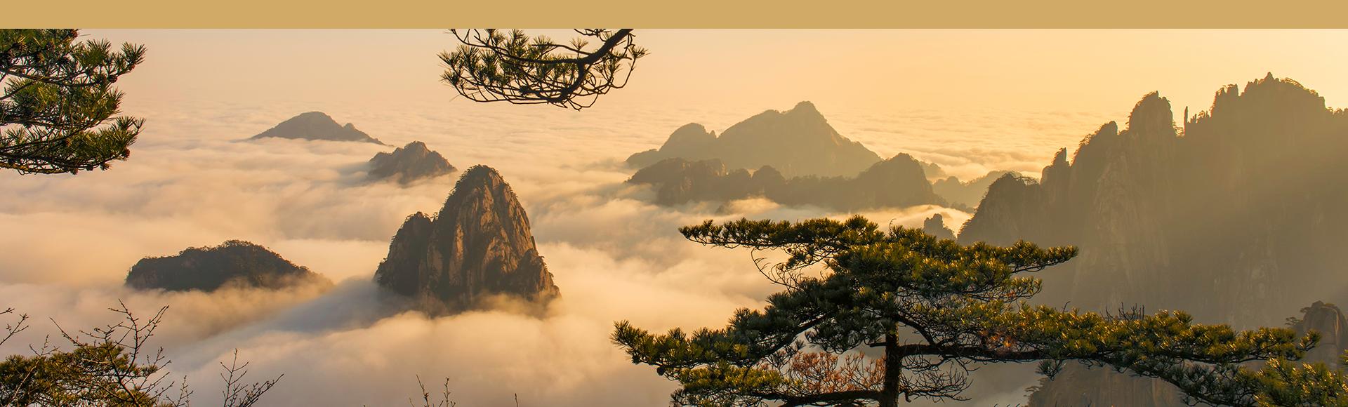 te amarillo Huo Shan Huang Ya provincia Anhui China